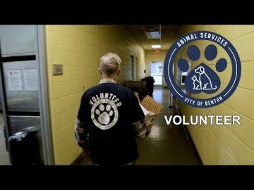 """Teamwork"" Volunteer at the Linda McNatt Animal Care & Adoption Center"