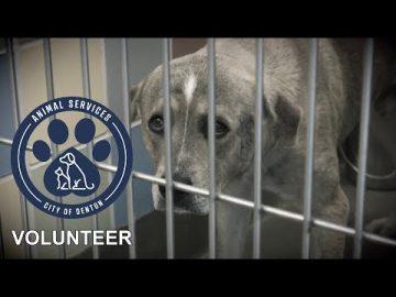 """Passion"" Volunteer at the Linda McNatt Animal Care & Adoption Center"